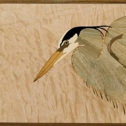 Altobello-Craig-heron-close-up-for-web
