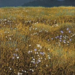 Hays-William-Autumn-Field