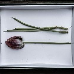 Van Loon-Carol-Flowers-in-box-1151