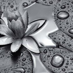 lehet-john-wet_waterlilly_reflection_space